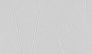 Бансай-45-серый
